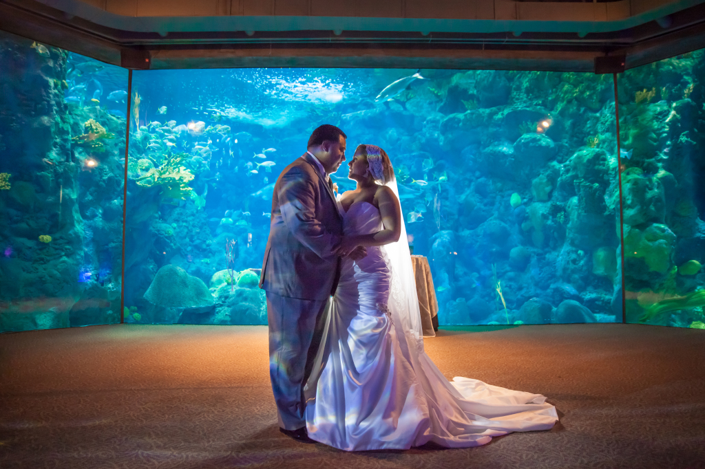 Pet E Aquarium : Florida Aquarium Wedding Trailer Randall Productions, LLC